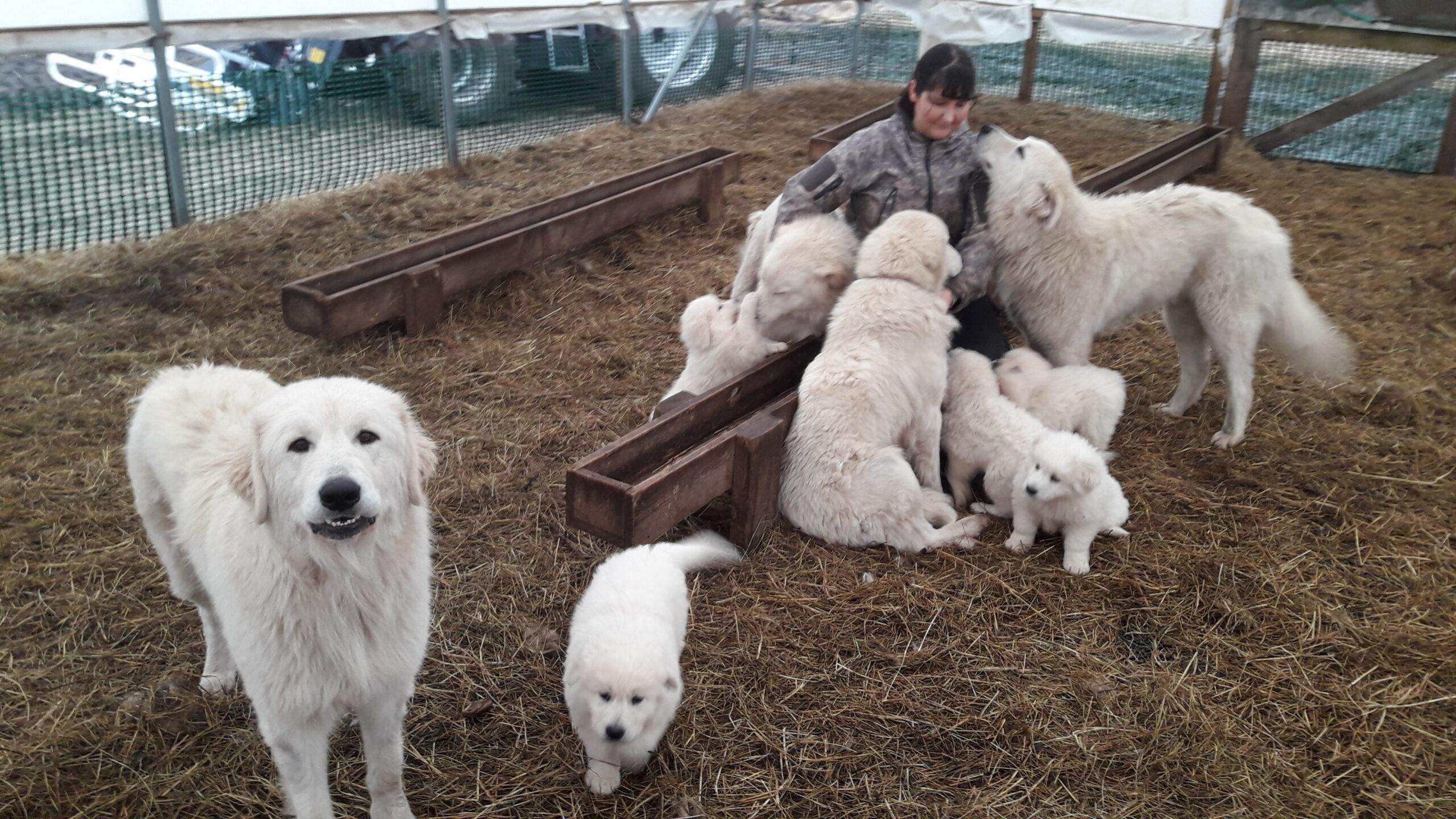 Karjavalvekoerad